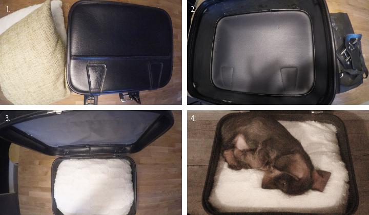koiranpeti matkalaukusta